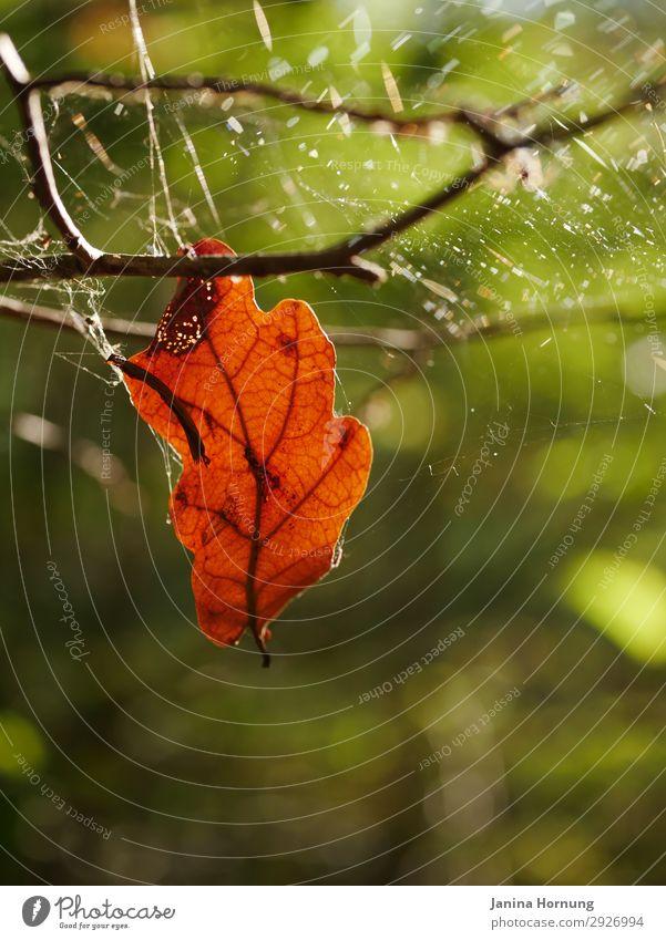 Halbverwittertes Blatt im Herbstwald Natur Pflanze Tier Einsamkeit Wald Religion & Glaube Senior Traurigkeit Gefühle Tod Vergänglichkeit Zeichen Trauer Ende