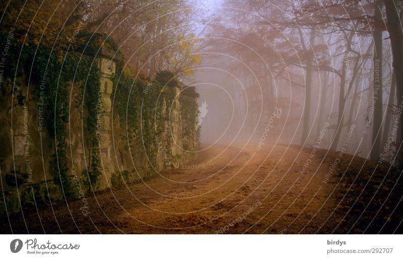 Deutsche Märchenstraße Natur alt schön Wald Wand Herbst Wege & Pfade Mauer Religion & Glaube Stil Stimmung außergewöhnlich Park Nebel Idylle Romantik