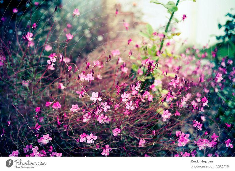 Blumenwind grün Pflanze Meer Landschaft ruhig Erholung Umwelt Herbst Garten braun Park rosa Schönes Wetter Sträucher Sommerurlaub