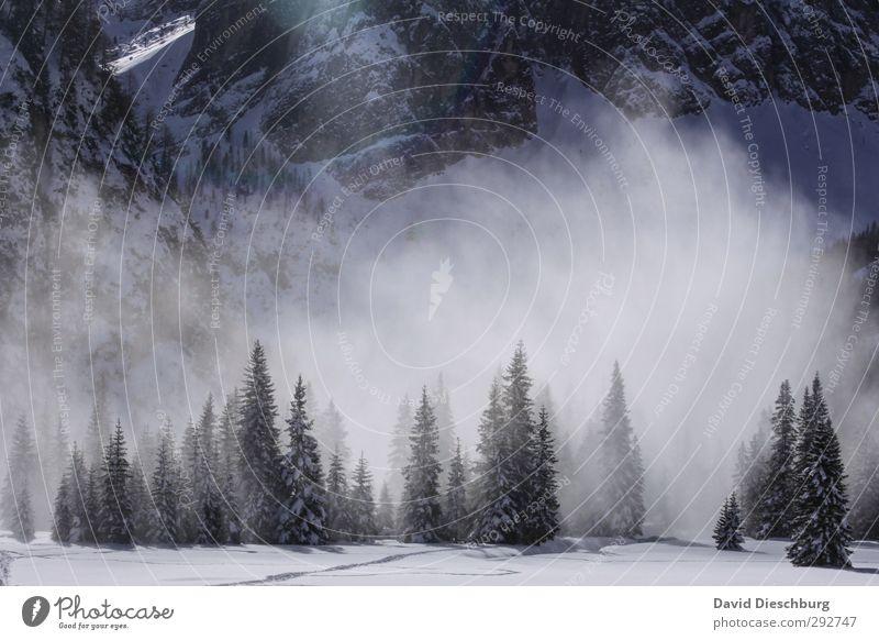 Staublawine blau Ferien & Urlaub & Reisen weiß Pflanze Baum Tier Winter Landschaft schwarz Wald Berge u. Gebirge Schnee Eis Nebel wandern Schönes Wetter