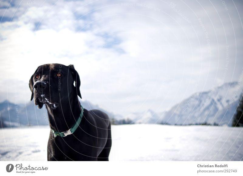 Spaziergang Spielen Tourismus Ausflug Winter Schnee Winterurlaub Berge u. Gebirge wandern Natur Landschaft Himmel Wolken Hügel Gipfel Schneebedeckte Gipfel Tier