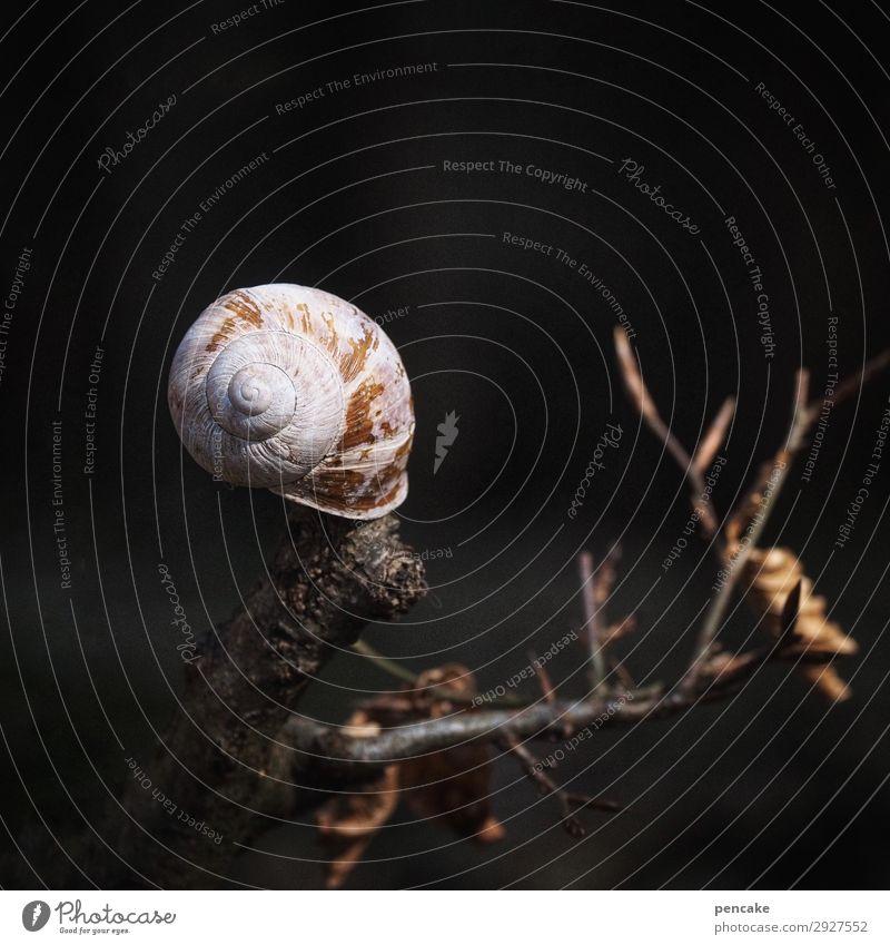 herausragend | lichtfängerin Baum Wald dunkel Wärme Tod Erde Ast Urelemente trocken nah Schnecke Bühnenbeleuchtung Schneckenhaus Auferstehung