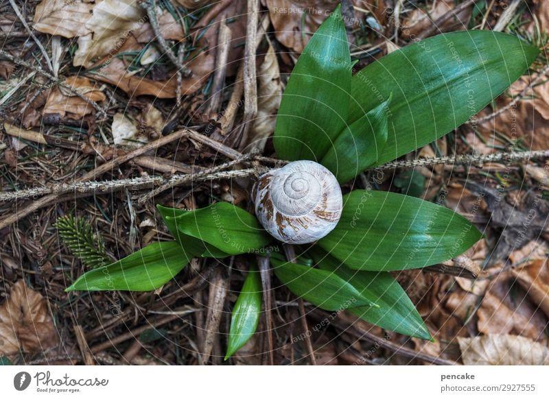 anfang und ende Waldboden Schneckenhaus Frühling Jahreslauf Lebenslauf Knoblauch Beginn Farbfoto grün Pflanze Natur Außenaufnahme Wildpflanze Nahaufnahme
