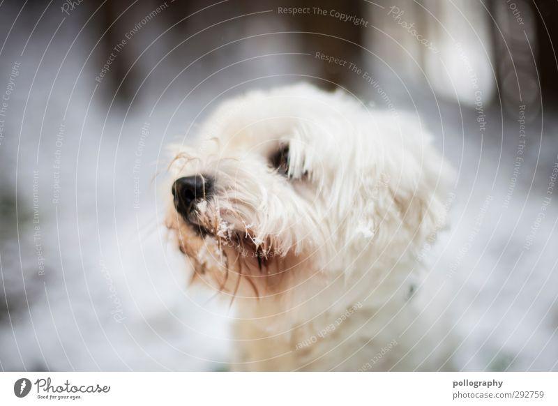 neugierig Natur Winter Schnee Wald Tier Haustier Hund 1 Begierde achtsam Neugier Interesse Hoffnung Überraschung Sehnsucht Unschärfe Farbfoto Gedeckte Farben