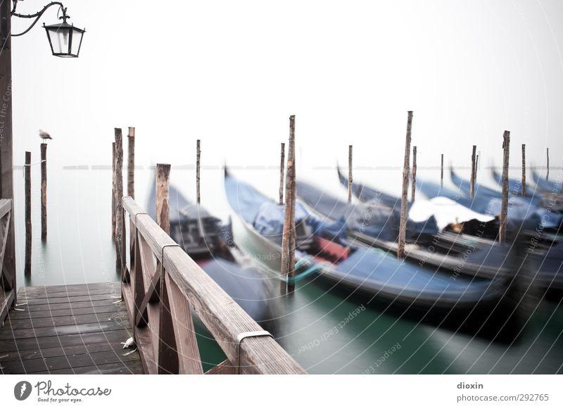 Gruppenbild mit Möwe Ferien & Urlaub & Reisen Tourismus Sightseeing Städtereise Wasser Venedig Italien Stadt Hafenstadt Verkehr Verkehrsmittel Schifffahrt
