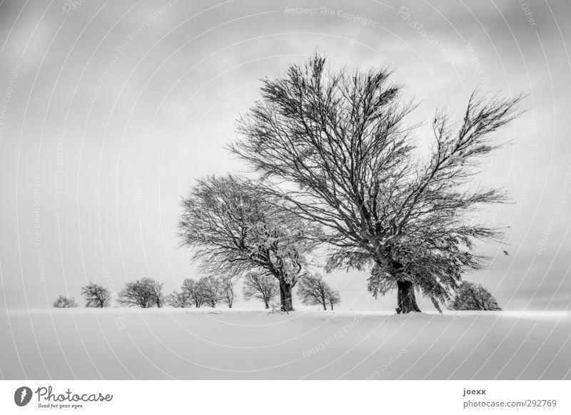 ab und zu geneigt Himmel Natur alt weiß Baum Wolken Landschaft Winter schwarz Berge u. Gebirge kalt Schnee Horizont Feld groß skurril