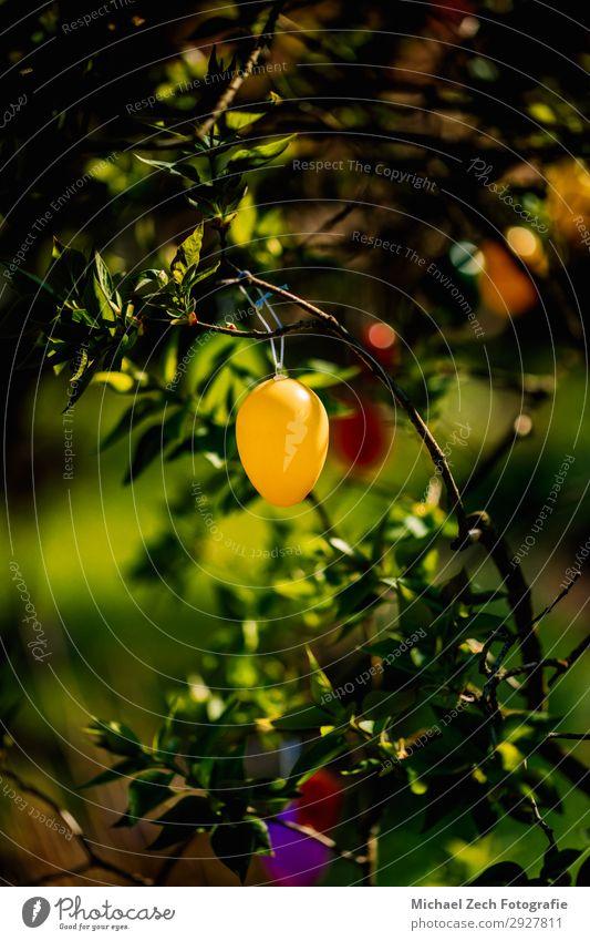 gelbes Osterei, das an einem Baum in einem Garten hängt. Design Glück schön Jagd Dekoration & Verzierung Feste & Feiern Ostern Kunst Natur Pflanze Frühling