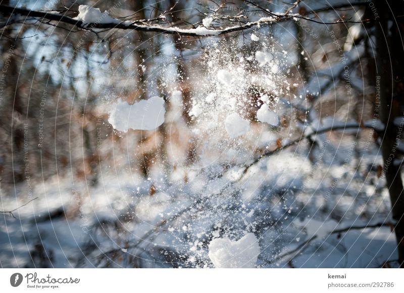 Schnee, der von Ästen fällt Winter Umwelt Natur Pflanze Schönes Wetter Eis Frost Schneefall Baum Zweig Ast Wald fallen hell kalt Winterlicht Schneebälle