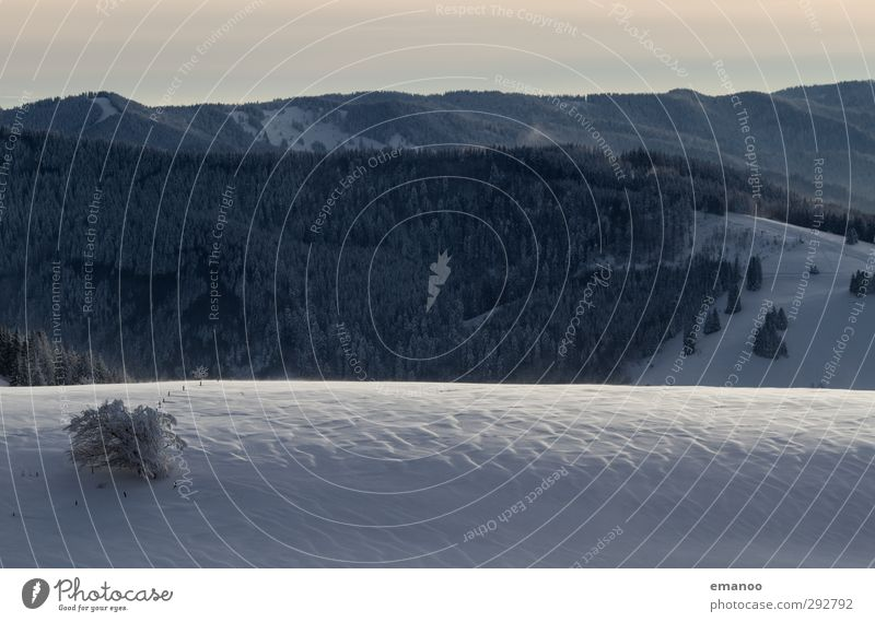 Schneerippel Ferien & Urlaub & Reisen Winter Winterurlaub Berge u. Gebirge wandern Natur Landschaft Klima Wetter Wind Sturm Eis Frost Pflanze Baum Wald Hügel