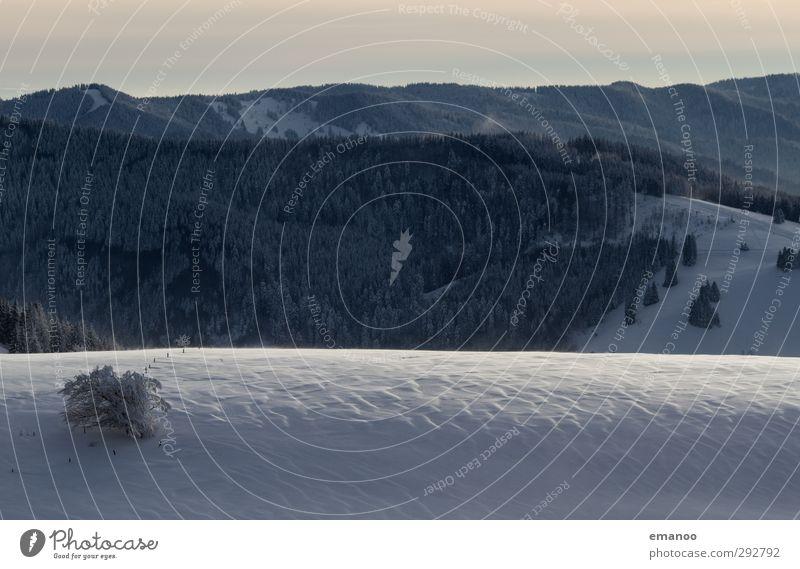 Schneerippel Natur Ferien & Urlaub & Reisen Pflanze Baum Landschaft Winter Wald Berge u. Gebirge kalt Eis Wetter Wind Klima wandern Frost
