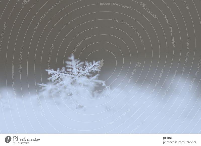 Eintagsflocke Umwelt Natur Wetter Schnee Schneefall blau grau Schneeflocke Schneekristall Eis Flocke Farbfoto Außenaufnahme Nahaufnahme Makroaufnahme