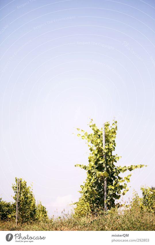 Da lang. grün Kunst ästhetisch Wein Wein Weinlese Weinberg Weinbau Weintrauben Weingut Ernte