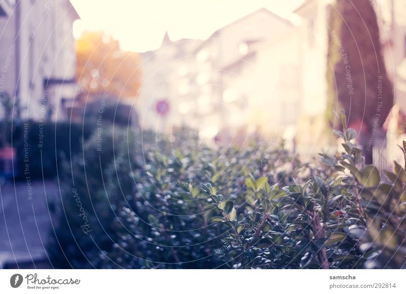 Frühlingsgefühle Natur Stadt schön Pflanze Haus Umwelt Wärme Gefühle Frühling Glück Garten Stimmung natürlich Zufriedenheit Sträucher Lebensfreude
