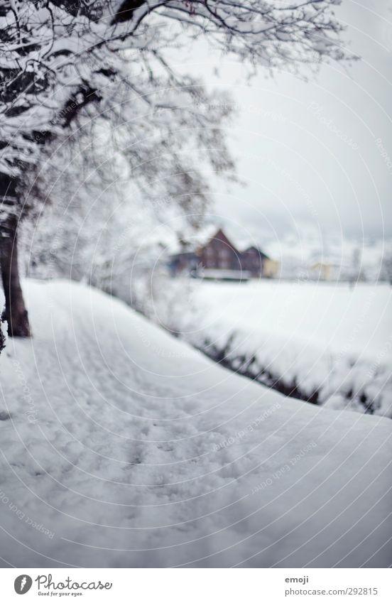 Schwyz Natur weiß Winter Umwelt kalt Schnee Wege & Pfade Spuren