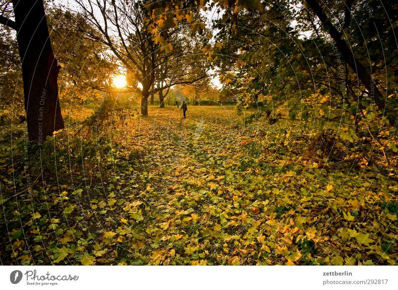 Sonnenuntergang im Herbst Garten Frau Erwachsene 1 Mensch 45-60 Jahre Umwelt Natur Landschaft Wetter Schönes Wetter Wildpflanze Park Wiese Wald Freude Glück