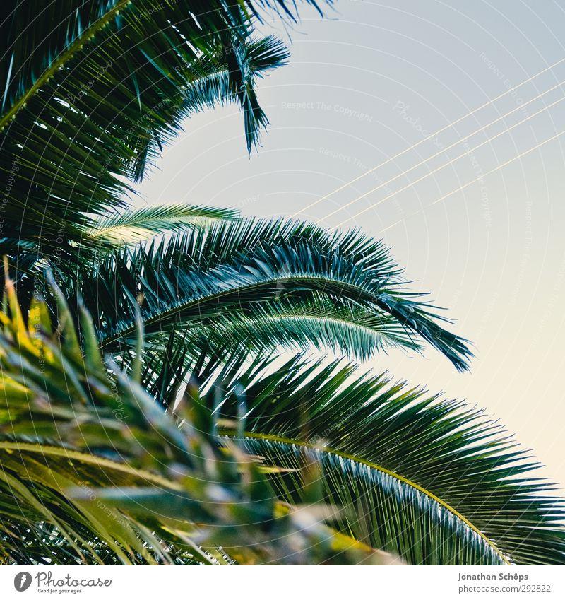 Korsika XXI Ferne Sommer Umwelt Natur Schönes Wetter Pflanze Baum ästhetisch Palme grün Himmel Quadrat Palmenwedel Blätterdach Süden Farbfoto Außenaufnahme