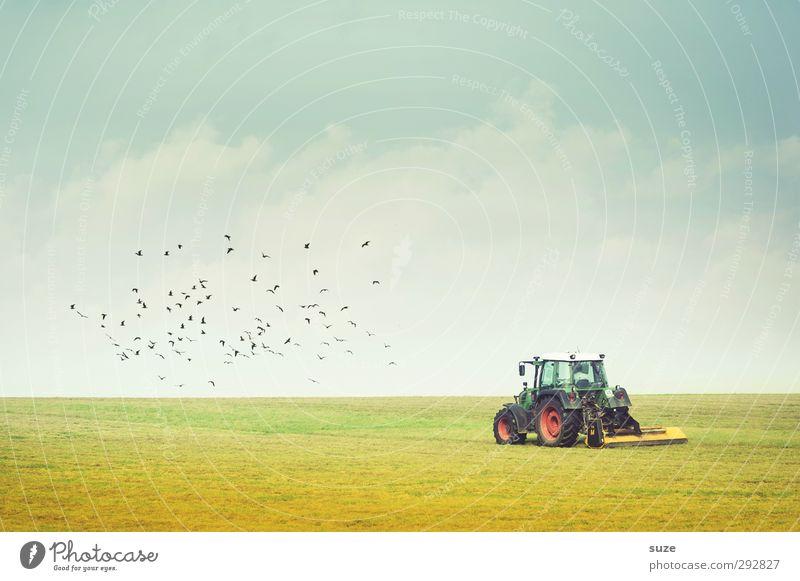 Voll am ackern Himmel Natur blau grün Sommer Landschaft Umwelt Wiese klein Horizont natürlich Vogel Arbeit & Erwerbstätigkeit Feld Wildtier authentisch