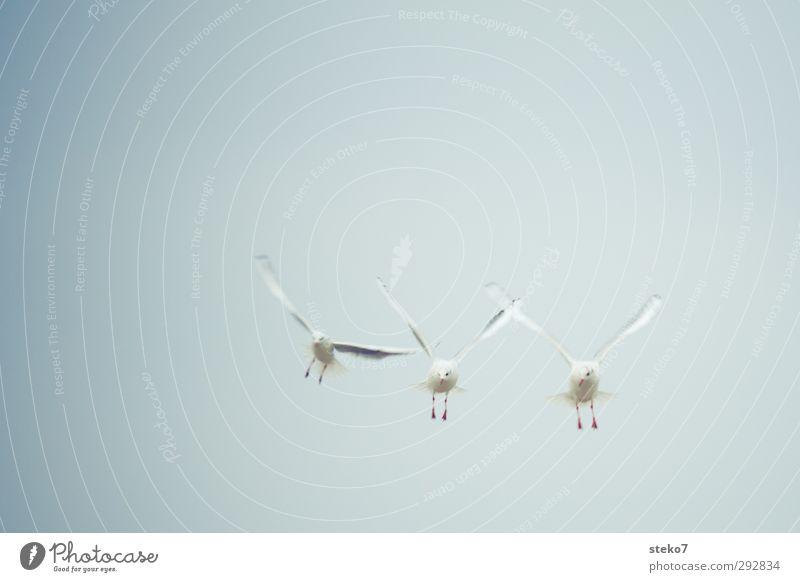 möwing Tier Vogel Zusammensein fliegen beobachten Neugier Jagd Möwe Symmetrie