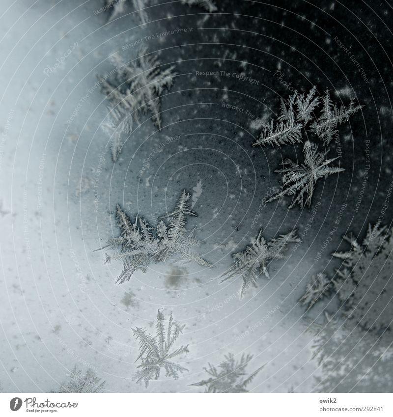 Welt voller Wunder Winter Eis Frost Autofenster Glasscheibe authentisch kalt klein nah natürlich niedlich Spitze stachelig viele bizarr Idylle Ordnung rein