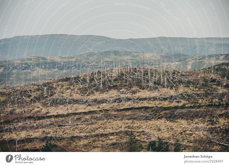 zerstörter Wald auf der Isle of Skye, Schottland Umwelt Natur Landschaft Urelemente Erde Klimawandel schlechtes Wetter Unwetter Wind Sturm bedrohlich Insel