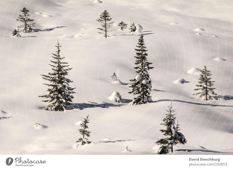 Glitzerwelt Ferien & Urlaub & Reisen Winter Schnee Winterurlaub Landschaft Pflanze Tier Schönes Wetter Eis Frost Baum Wald Alpen blau schwarz weiß Dolomiten
