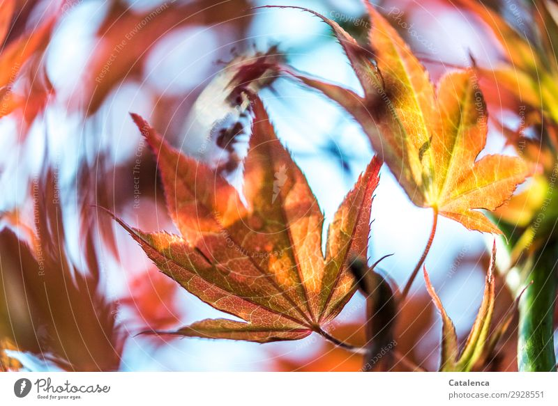 Windig Himmel Natur Pflanze schön grün rot Baum Blatt Frühling Bewegung Garten orange rosa Stimmung Park Fröhlichkeit