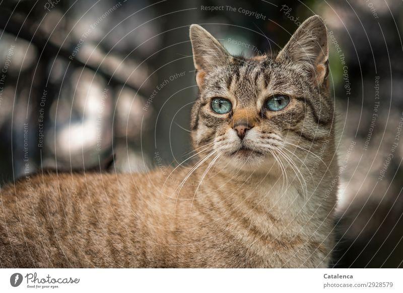 Ausschau Katze blau schön Tier schwarz Garten braun Stimmung einzigartig beobachten Haustier Tierliebe