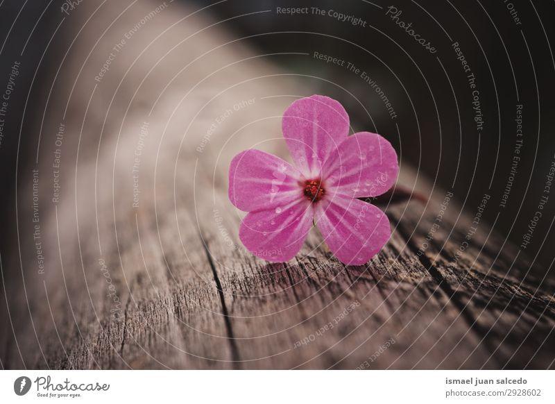 rosa Blütenpflanze im Frühjahr auf dem Stamm Blume Blütenblatt Pflanze Garten geblümt Natur Dekoration & Verzierung Romantik Beautyfotografie zerbrechlich