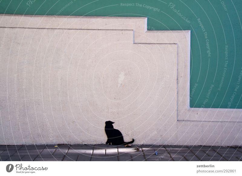 Katze Stadt Haus Mauer Wand Fassade sitzen warten lustig geduldig ruhig Ausdauer Neugier Dresden Oktober wallroth Grafik u. Illustration Gemälde Farbfoto