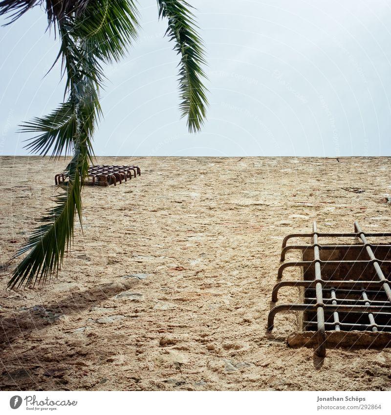 Korsika XXII Sommer Schönes Wetter Pflanze Baum ästhetisch Palme grün Himmel Quadrat Palmenwedel Blätterdach Süden Farbfoto Außenaufnahme Menschenleer Gitter