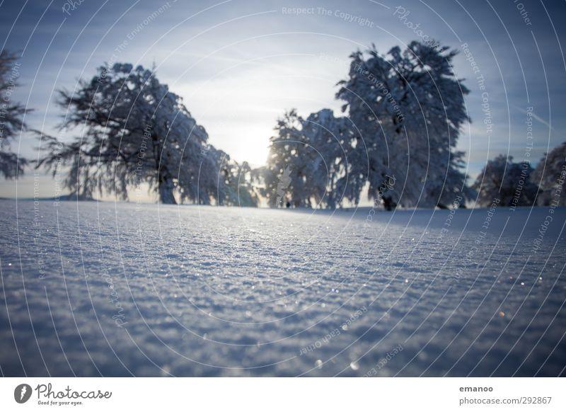 Winterwetterbuchen Himmel Natur Ferien & Urlaub & Reisen Pflanze blau Baum Sonne Landschaft Wald Berge u. Gebirge kalt Umwelt Schnee Tourismus Wetter