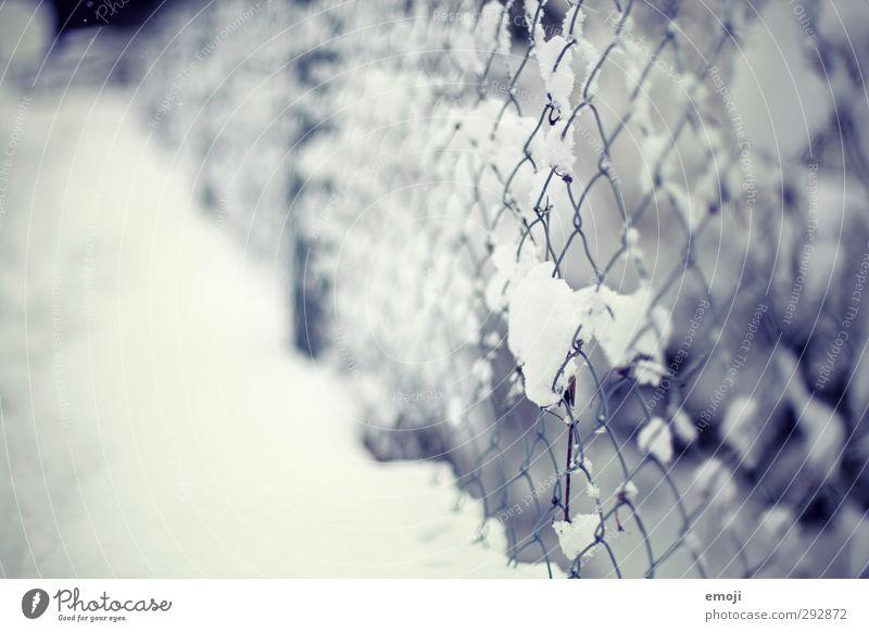 anhänglich Umwelt Natur Winter Schnee Garten Park kalt blau weiß Zaun Maschendraht Maschendrahtzaun Farbfoto Außenaufnahme Nahaufnahme Menschenleer Tag