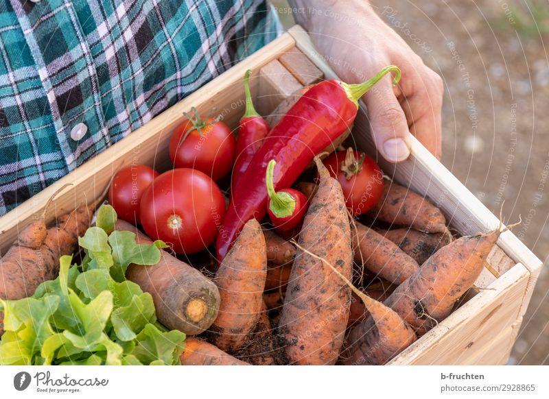 Gemüsekiste Lebensmittel Salat Salatbeilage Ernährung Bioprodukte Vegetarische Ernährung Landwirtschaft Forstwirtschaft Mann Erwachsene Hand Finger 1 Mensch