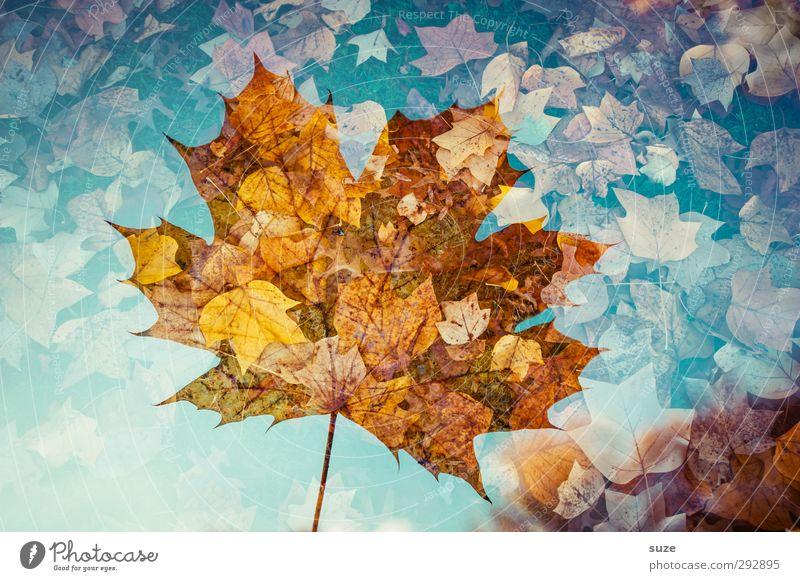Durchscheinbar Umwelt Natur Pflanze Herbst Wetter Schönes Wetter Blatt ästhetisch außergewöhnlich fantastisch nachhaltig schön Kreativität Vergänglichkeit