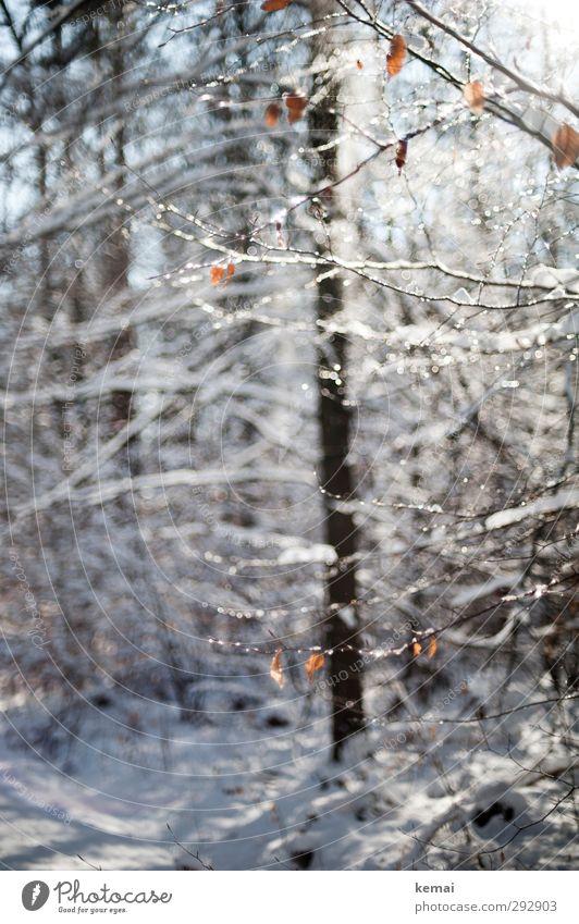 Wintersonne Umwelt Natur Landschaft Pflanze Sonnenlicht Schönes Wetter Eis Frost Schnee Baum Sträucher Blatt Zweig Ast Wald Wachstum frisch hell kalt weiß