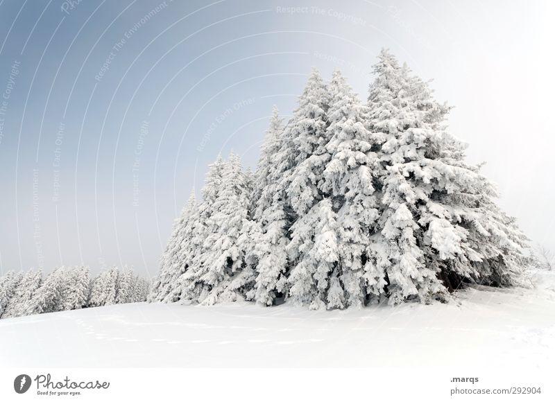 1149 m.ü.M. Tourismus Ausflug Winterurlaub Natur Landschaft Himmel Schönes Wetter Eis Frost Schnee Baum Wald hell kalt schön Stimmung Perspektive Jahreszeiten