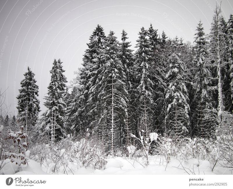 702m üNN Schnee Wald Lebensfreude Schneelandschaft Waldlichtung Fichtenwald Farbfoto Gedeckte Farben Außenaufnahme Tag