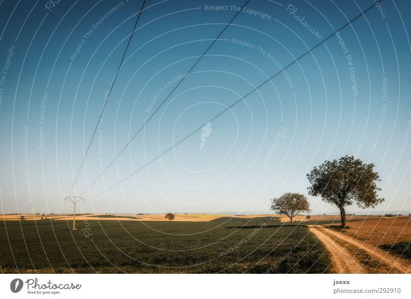 Lange Leitung Energiewirtschaft Landschaft Wolkenloser Himmel Horizont Sommer Schönes Wetter Baum Feld Wege & Pfade Fußweg Unendlichkeit natürlich blau braun