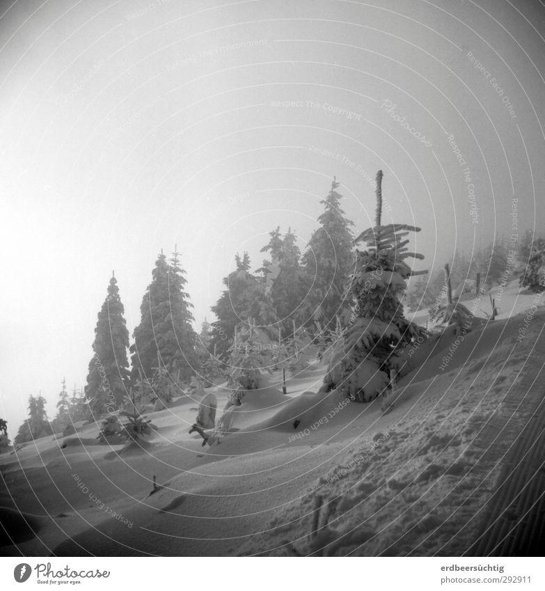 * Natur Ferien & Urlaub & Reisen Baum Winter ruhig Schnee glänzend Klima Tourismus Schönes Wetter Idylle Ausflug Fußweg rein Tanne Expedition