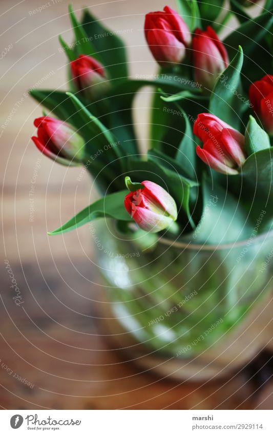 Tulpenliebe Natur Sommer Pflanze Blatt Blüte Frühling Gefühle Stimmung Geburtstag Blumenstrauß Überraschung Duft Muttertag