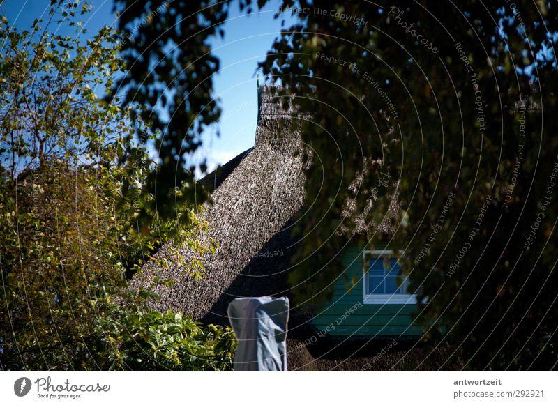 Reeddach unter Bäumen Dorf Fischerdorf Haus Einfamilienhaus Traumhaus Mauer Wand Dach Gelassenheit Farbfoto mehrfarbig Außenaufnahme Menschenleer