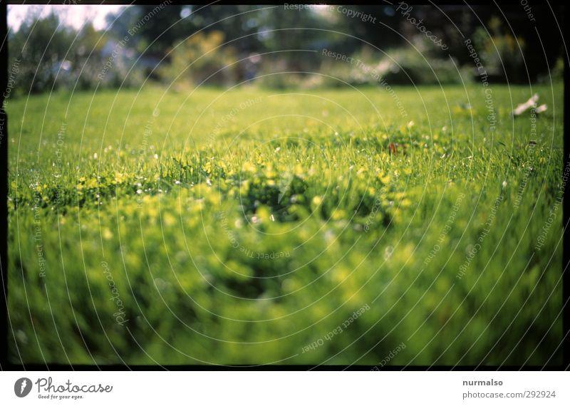 ich WILL wieder GRÜN ! Natur grün schön Pflanze Tier Landschaft Erholung Wiese Leben Sport Frühling Garten Stimmung Kunst Vogel Park