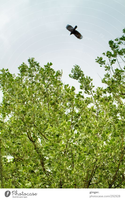 Sturzflug ins Glück Himmel Natur grün Pflanze Baum Tier Blatt Umwelt Frühling Freiheit hell Luft Vogel fliegen Wildtier geschlossen