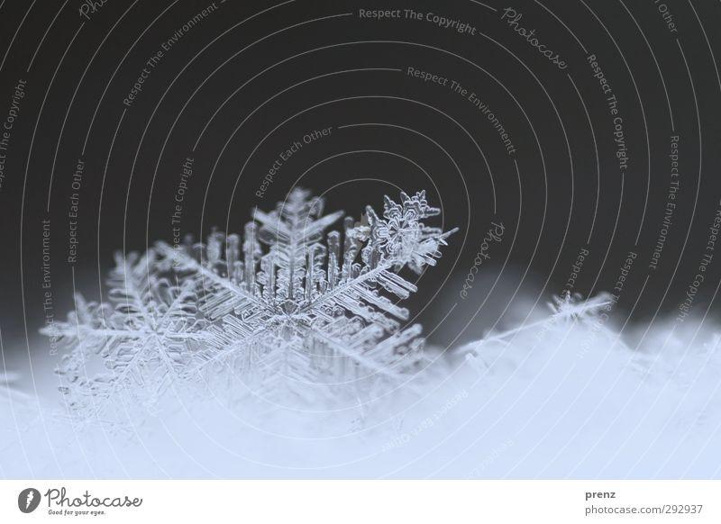 vergänglich Umwelt Natur Wetter Schnee Schneefall blau grau Schneeflocke Schneelandschaft Schneekristall Eis kalt Nahaufnahme Makroaufnahme Farbfoto