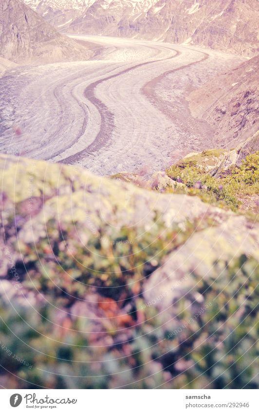 Gletschersicht Natur Ferien & Urlaub & Reisen alt Pflanze Sommer Landschaft kalt Berge u. Gebirge Umwelt natürlich Schnee Eis Tourismus groß Ausflug Klima