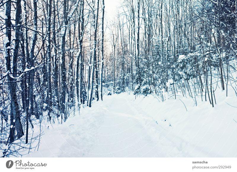 Winterwald Ferien & Urlaub & Reisen Ausflug Schnee Winterurlaub wandern Umwelt Natur Landschaft Pflanze Klima Klimawandel Wetter Eis Frost Wald Wege & Pfade
