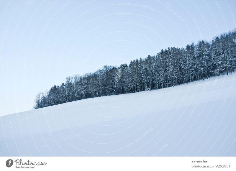 Winterwald II Himmel Natur weiß Landschaft Winter Wald Umwelt kalt Schnee natürlich Eis Wetter Klima wandern Spaziergang Frost