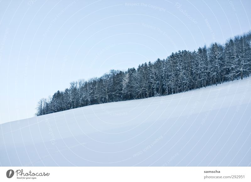 Winterwald II Schnee Winterurlaub wandern Umwelt Natur Landschaft Himmel Klima Klimawandel Wetter Eis Frost Wald kalt natürlich Umweltverschmutzung Umweltschutz
