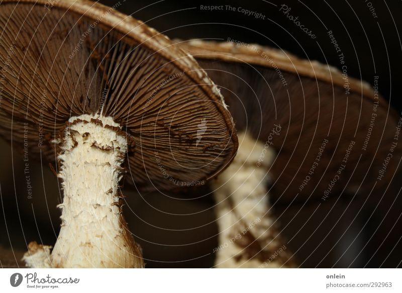 kecker Hut, Herr Pilz Pilze Natur Pflanze Herbst dreckig bizarr Baumpilz Pilzhut Pilzfuss Farbfoto Innenaufnahme Nahaufnahme Detailaufnahme Menschenleer