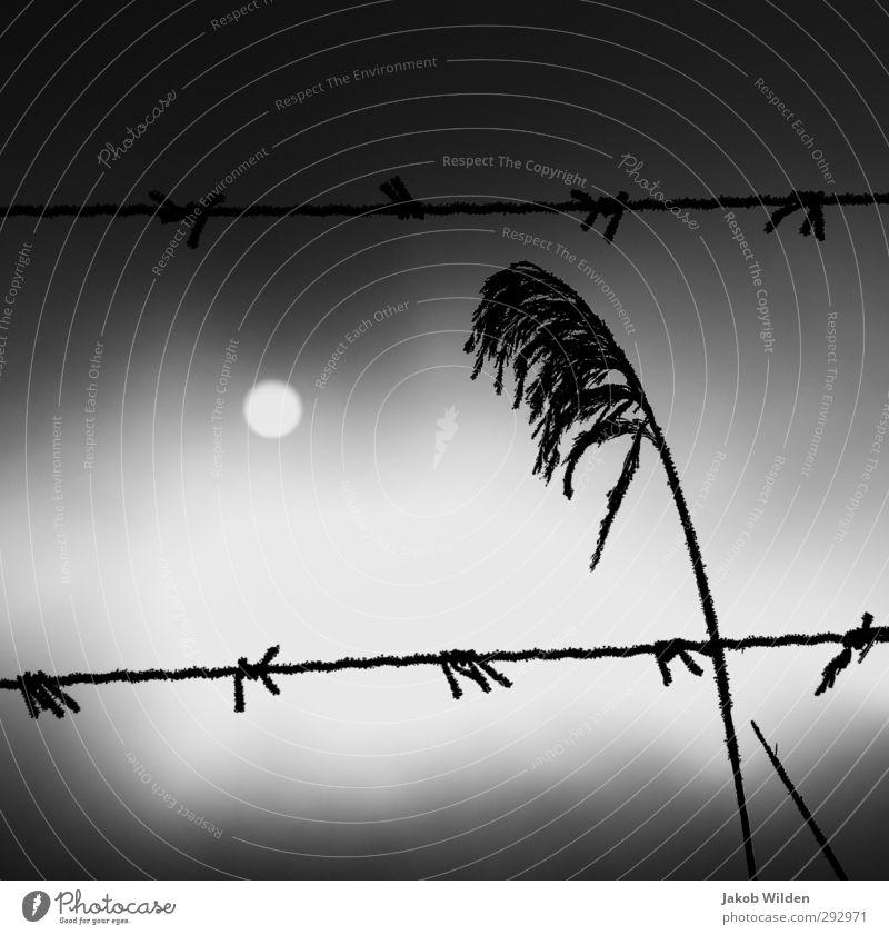 Wintersonne Umwelt Natur Landschaft Pflanze Erde Luft Himmel Wolken Sonne Sonnenaufgang Sonnenuntergang Endzeitstimmung Schwarzweißfoto Gedeckte Farben